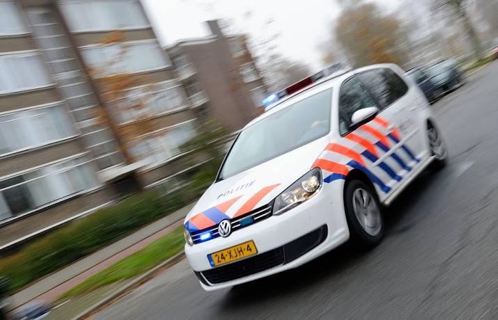 Ree veroorzaakt ongeval op A32 Steenwijk.