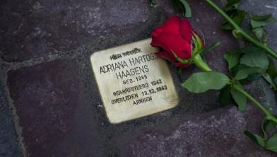 Er is een rode roos gelegd bij een van de nieuwe Stolpersteine in Middelharnis