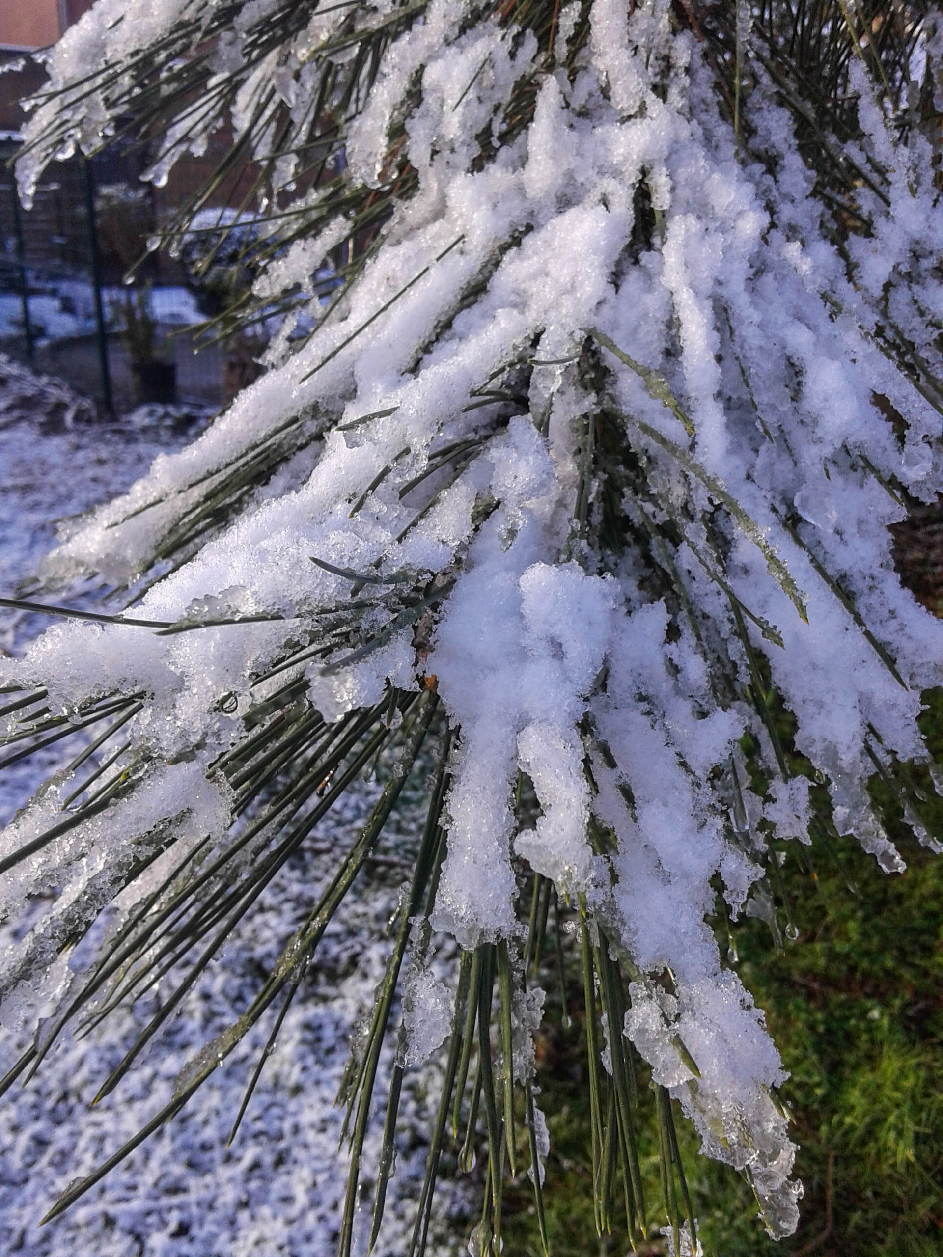 Sneeuw-26