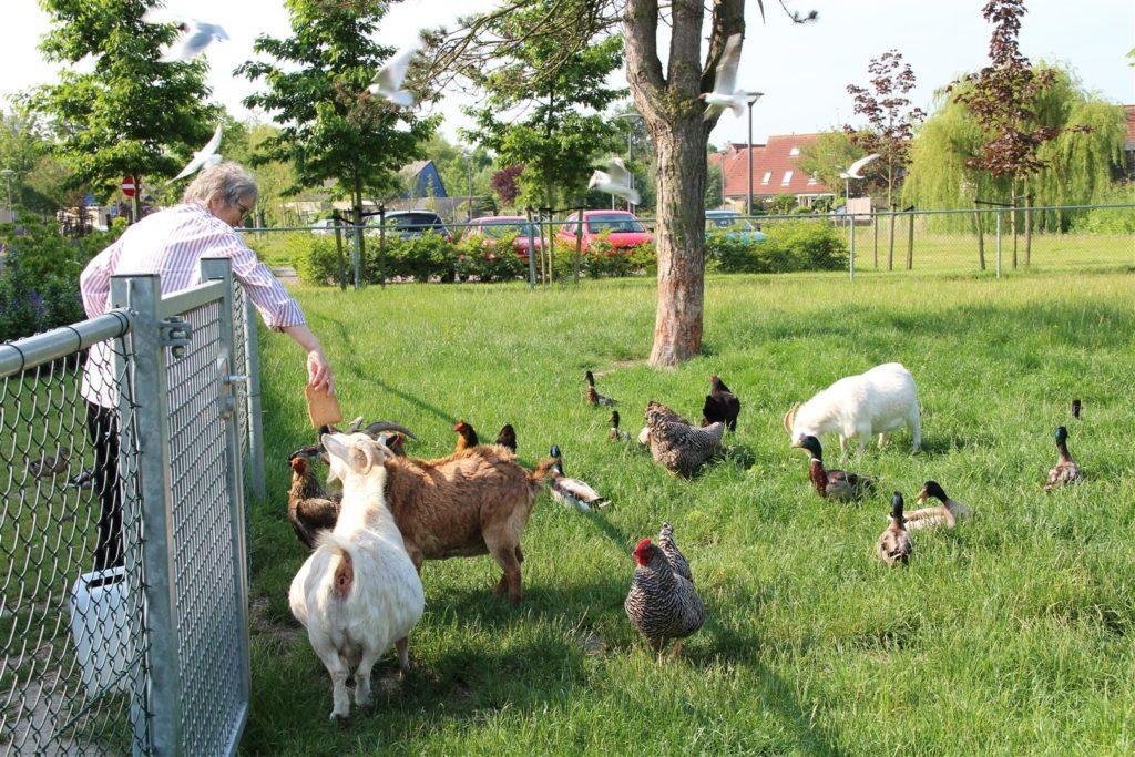 De geitenweide bij Nieuw Rijsenburgh