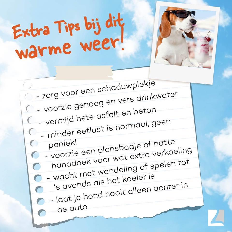 Huisdier tips zomer Van der Helm