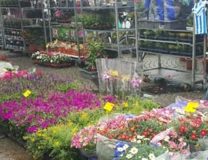 bloemen gekleurd