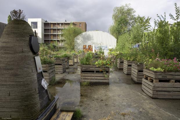 Fietstocht Eetbare Stad Groningen langs vier buurtmoestuinen