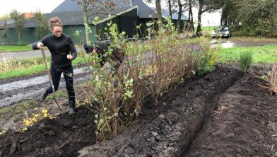 Gedeputeerde Nienke Homan helpt mee zaailingen inkuilen in bomenhub Muntendam.