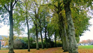 Gaan deze bomen in het Zaanenpark bijvoorbeeld het extreme weer overleven?