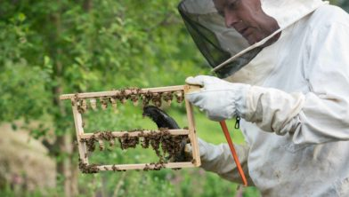 Honing slingeren in De Tuin.