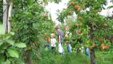 Zelf fruit plukken. Hoe leuk is dat.