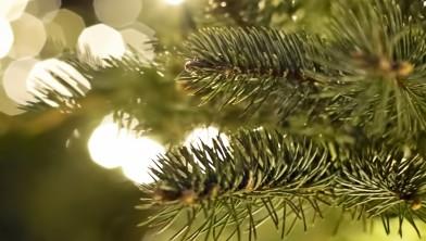 Tips En Tricks Voor Een Brandveilige Kerstboom In Je Woonkamer