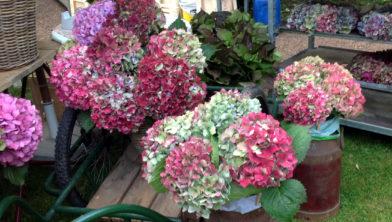 Botanische Tuin Kerkrade : Nazomer fair in botanische tuin kerkrade heerlen