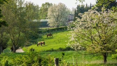 Paarden bij Ten Esschen