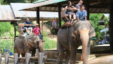 c61f4a095be071 Think Again: 'Ga niet naar attracties met wilde dieren!'