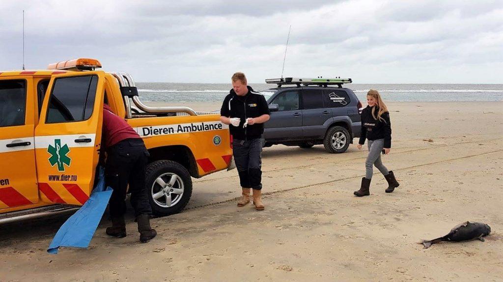 Dode bruinvis aangetroffen op het strand