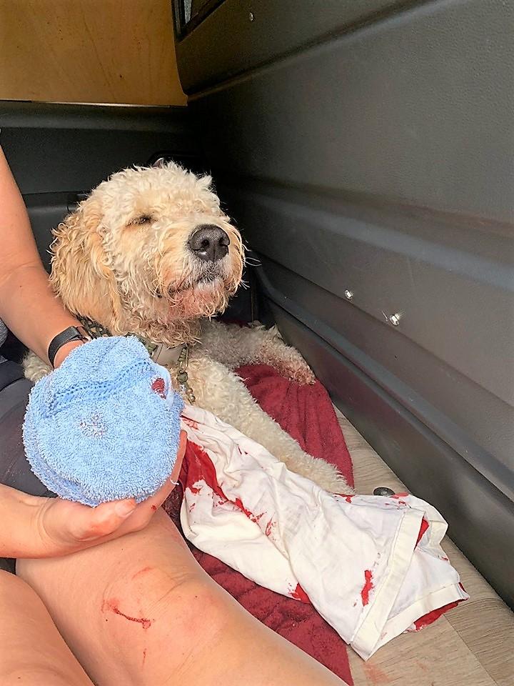 Hond ernstig gewond door glas in duinen