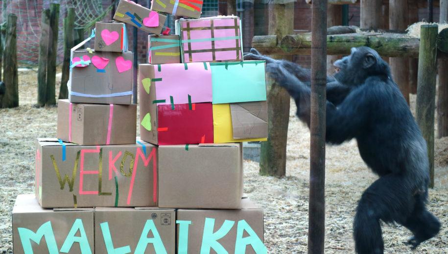 Blokkentoren vol lekkers voor Malaika