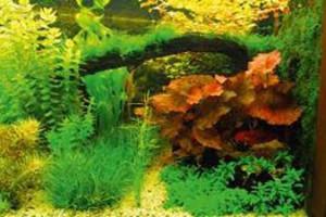 Aquariumplantlezing2015A
