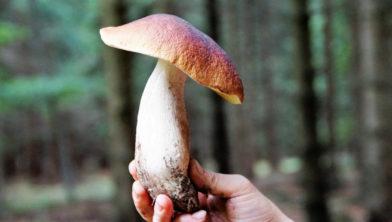 Een eetbare paddenstoel.
