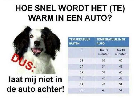 warm in auto