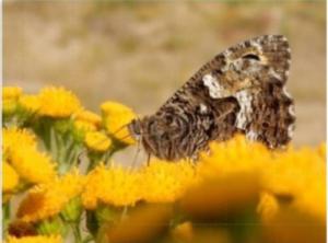 vlinderjaar