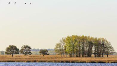 Nationaal Park Dwingelderveld,