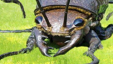 Big bugs.