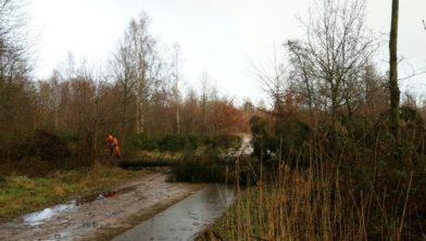 Door storm gevelde naaldboom wordt in stukken gezaagd.