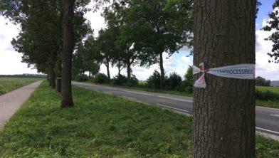 Waarschuwing eikenprocessierups langs Lemsterweg (archieffoto)