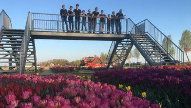 Tulpenbelevingsveld Creil