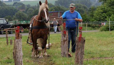 Boomslepen met paarden.