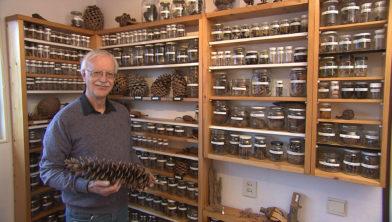 Piet Boersma met zijn verzameling dennenappels