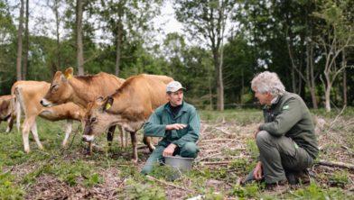 Boer Hakvoort en boswachter Bergman bij de koeien