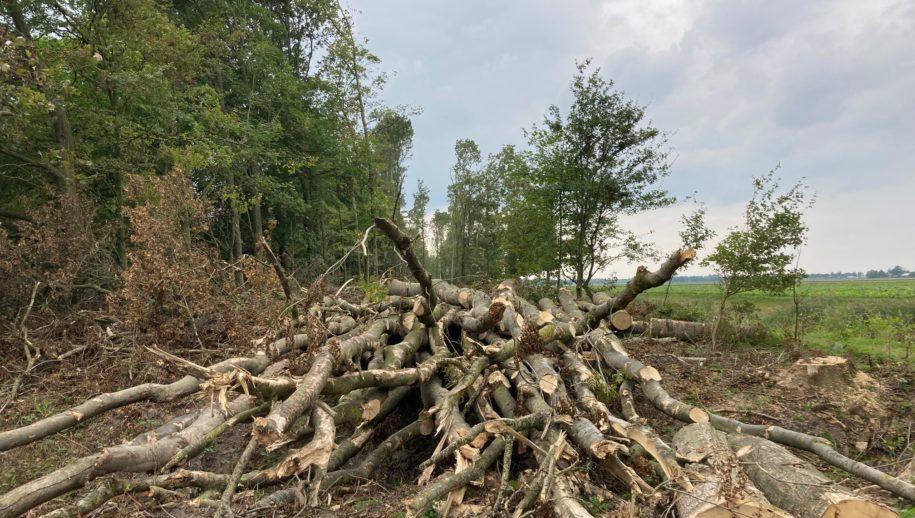 Boswerkzaamheden Wendelbos