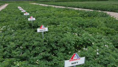 Next Generation Potatoes Agrico.