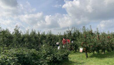 Plakweekend bij Vink Fruitboerderij