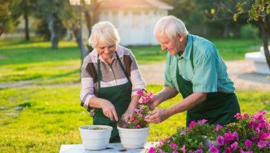 Tuinieren helpt het geheugen