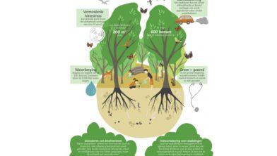 Een Tiny Forest is goed voor de biodiversiteit