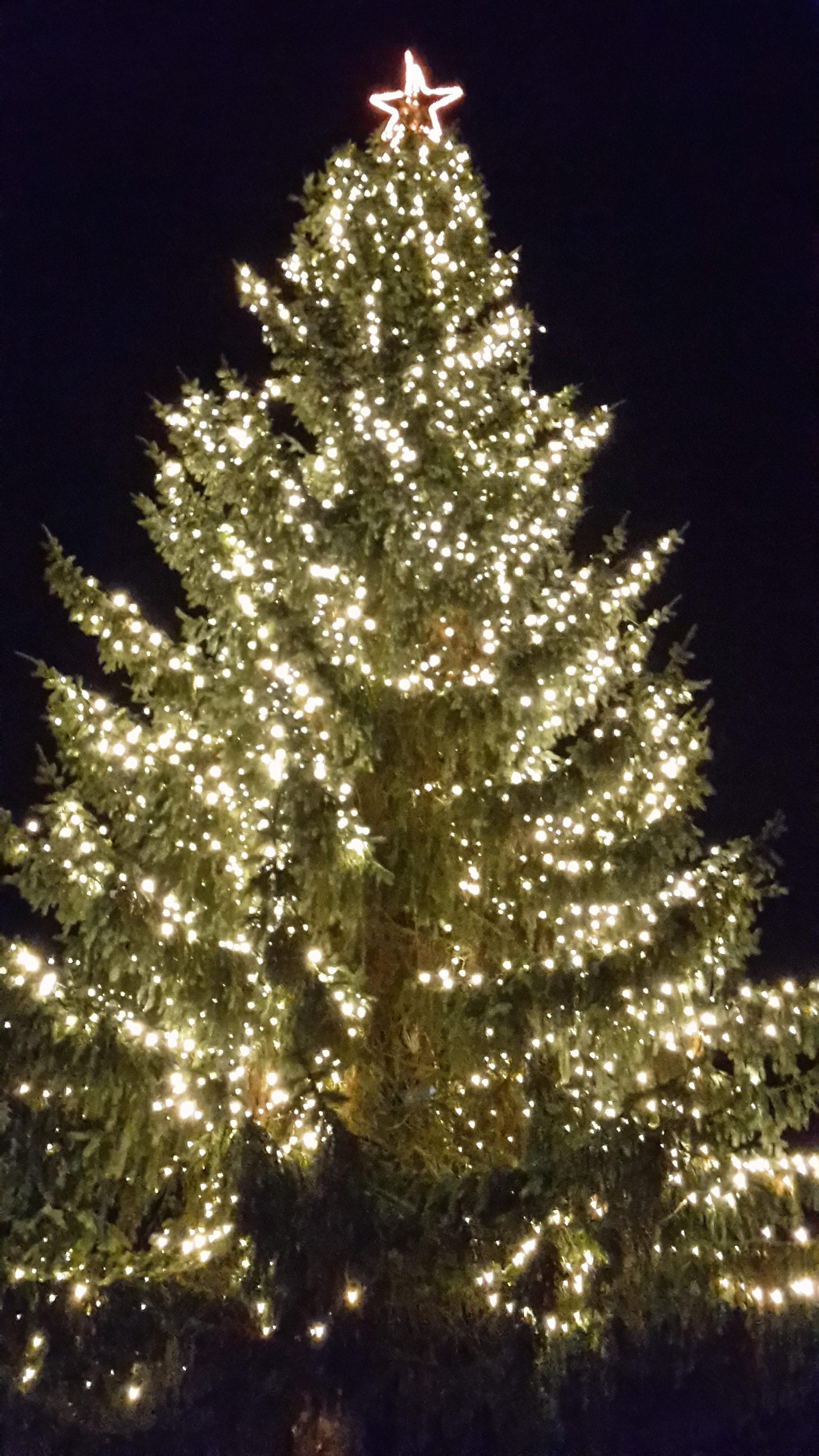 Ontsteken Van De Lichtjes In De Kerstboom Op Het Dorpsplein Wolfheze