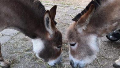 Onkey en Donkey