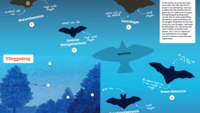 Deel van de zoekkaart, hoe herken je een vleermuis aan het silhouet