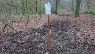Nieuwe aanplant van bomen en struiken op Quadenoord - ze sluiten er een wandelpad voor af