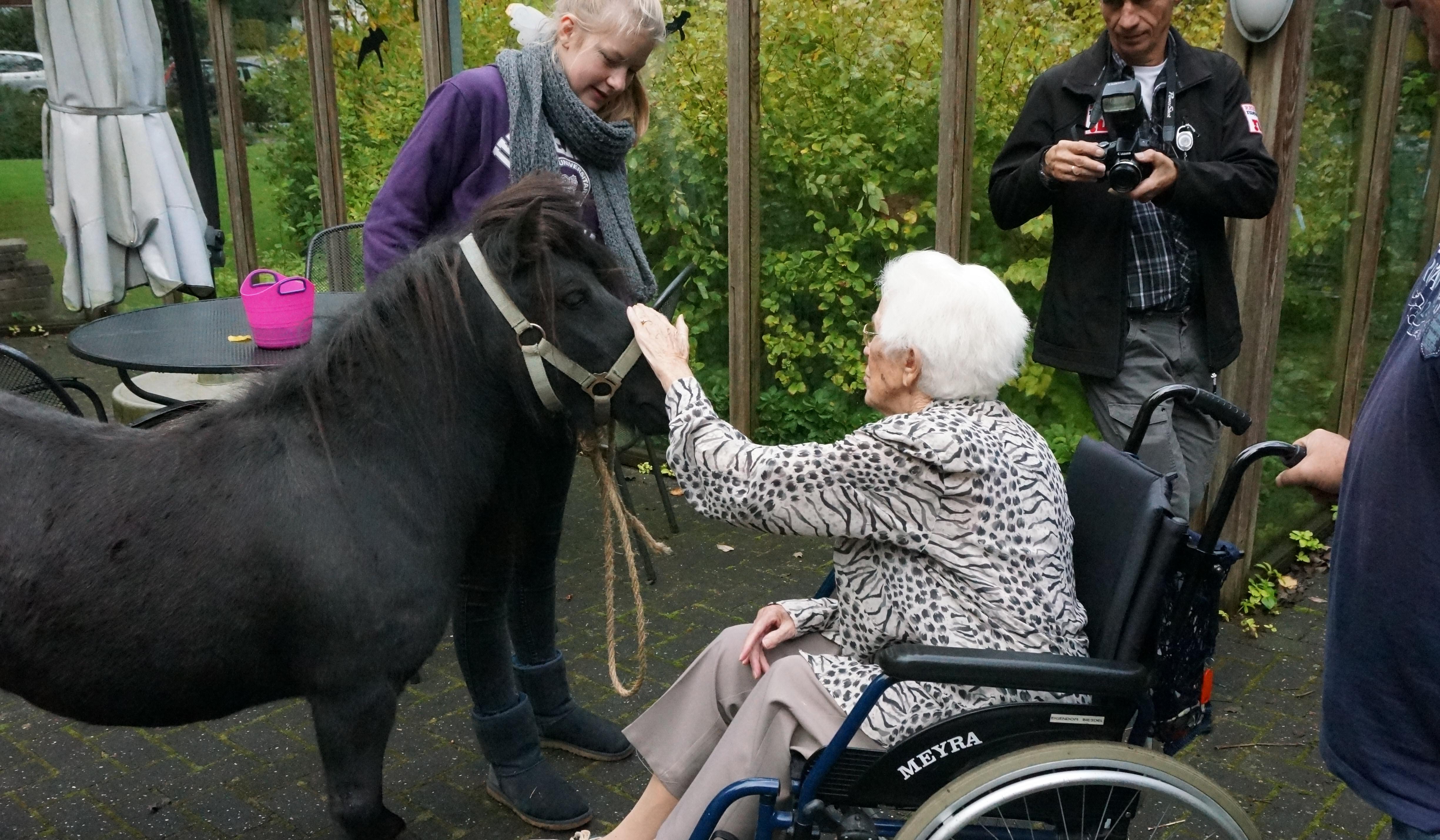 Groenhorst pony buiten bij Biesdel