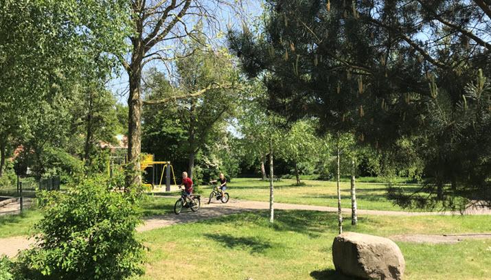 Tiny Forest Rheden - Basisschool 't Schaddeveld Dieren