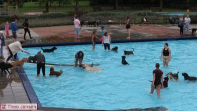 Hondenzwemmen in het openluchtzwembad in rheden