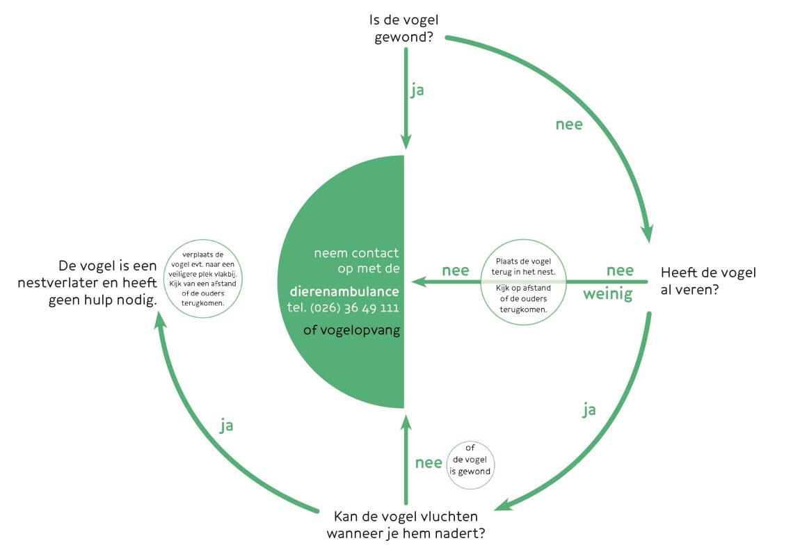 vogelbeslisboomcirkel