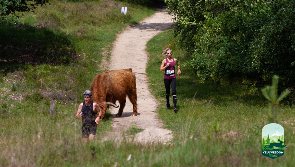 Veluwezoom Trail Experience