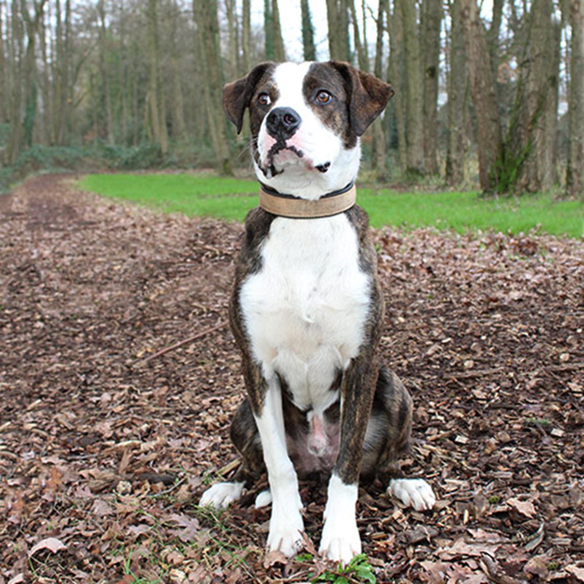 Huisdier van de week Pet - Dierentehuis Arnhem en omstreken