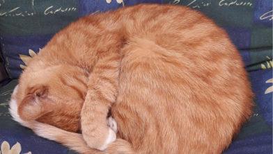 """""""Ongeloof maar vooral verdriet bij de kat van Bas nadat hij het nieuws hoorde"""""""