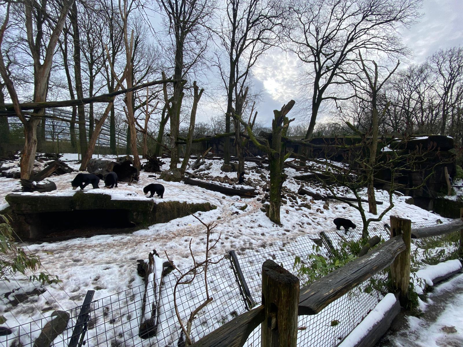 Burgers' Zoo na een week sneeuw