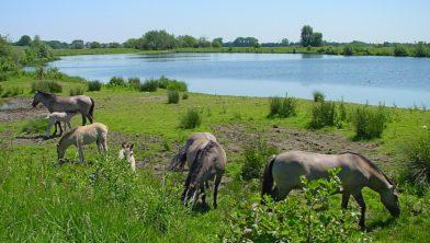 Wandel mee met Het Limburgs Landschap op zondag 29 september door de gevarieerde natuur van de Isabellegreend
