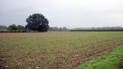 <em>middengebied tussen Obbicht en Grevenbicht</em>