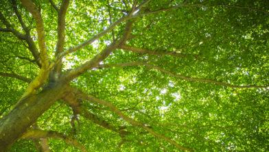 bomen onderdeel klimaatplan
